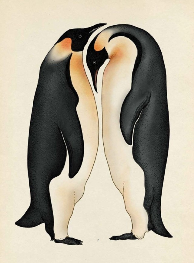 Penguins are lovely